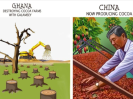 China Cocoa Production: A Machine That Processes In The Farm